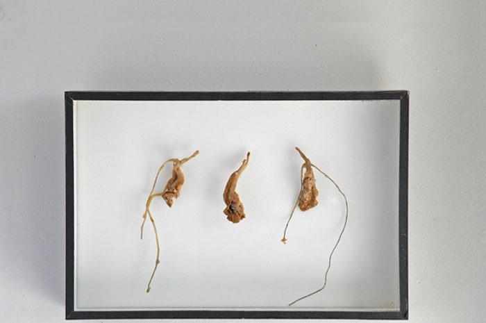 Feuilles de laitue, ficelle, boîte d'entomologiste, cire d'abeille,<br />25 x 38 x 5 cm
