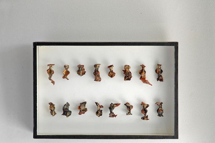 Seize trognons de pommes, boîte d'entomologiste, cire d'abeille,<br />25 x 38 x 5 cm