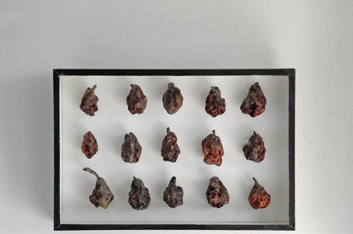 Quinze poires, boîte d'entomologiste, cire d'abeille,<br />25 x 38 x 5 cm